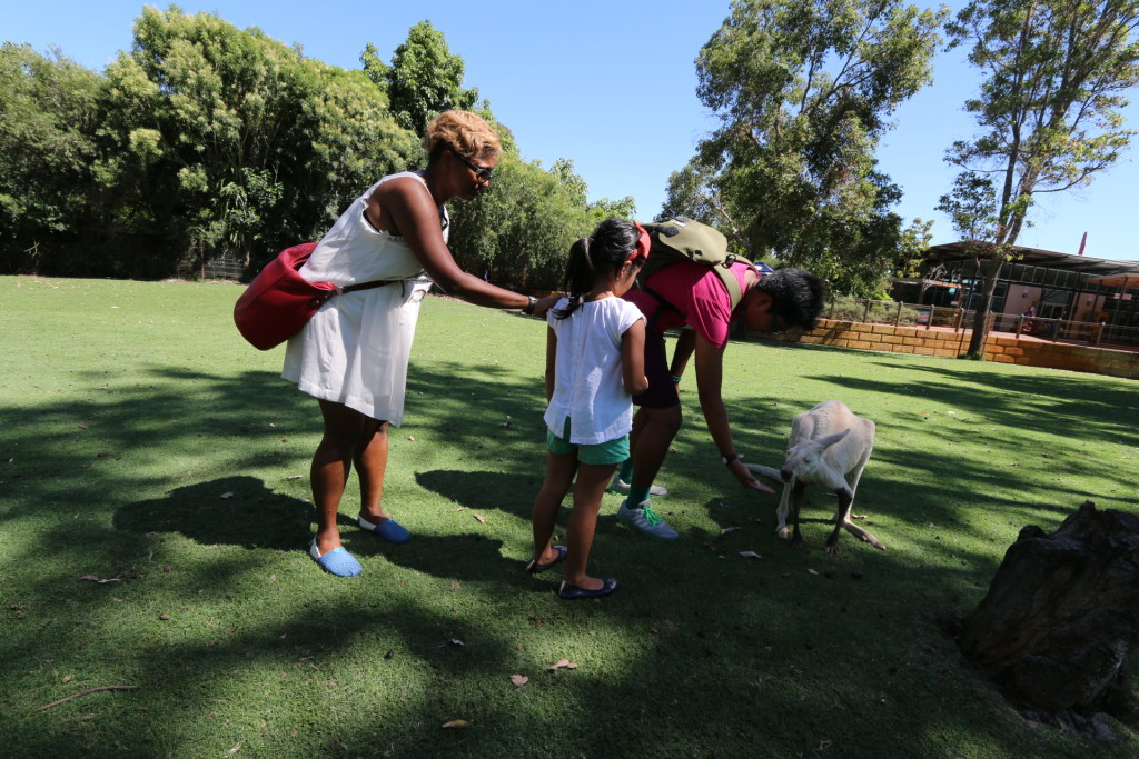 Feeding the kangaroo
