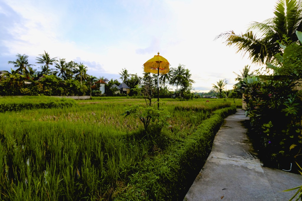 The view of the paddy field just right outside the villa