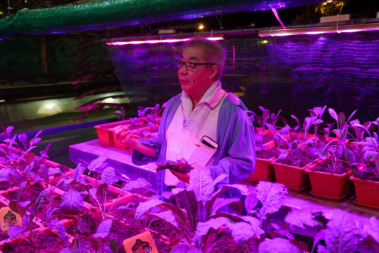 Mr. Lee, the owner of the organic farm explaining the benefits of Kale, a miracle vegetable